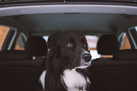 Can I break a car window to save a dying dog?